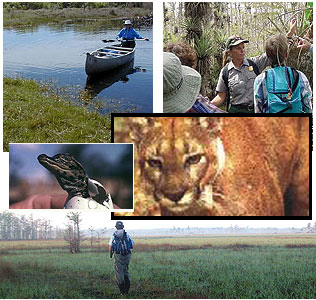 Big Cypress Wildlife Preserve